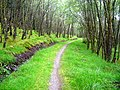 Path in Leanachan Forest - geograph.org.uk - 508227.jpg