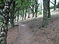 Path through Tinsel School Wood - geograph.org.uk - 1001720.jpg