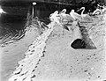 Pelikanen en reigers bij de vijver, Bestanddeelnr 252-1422.jpg