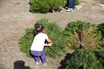 Peltzer Pines Tree Farm donates 150 trees to service members and their families 131216-M-EG514-011.jpg