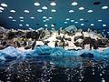 Penguins Loro Parque 13.jpg