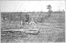 Black and white image of a man standing in a wasteland of massive tree stumps that stretch to the horizon. A few small tree trunks are standing.