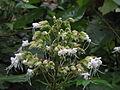 Periyalam-flower-bunch.JPG