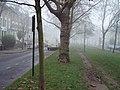 Petherton Road London - panoramio.jpg