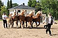 Pferdesportveranstaltung in Seifersdorf (Jahnsdorf)..2H1A8644WI.jpg