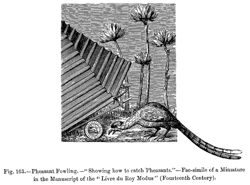 File:Pheasant Fowling Showing how to catch Pheasants Fac simile of a Miniature in the Manuscript of the Livre du Roy Modus Fourteenth Century.png