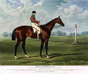Phosphorus (horse) - Phosphorus. Painting by John Frederick Herring, Sr.