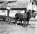 PikiWiki Israel 1546 Kibutz Gan-Shmuel sk19- 594 גן-שמואל-סוסי עבודה 1942.jpg