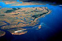 Pine Island, ACE Basin National Estuarine Research Reserve.jpg