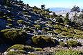 Pinsapos, Cañada del Cuerno 2 DSJ.JPG