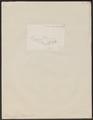 Piramutana blochii - 1700-1880 - Print - Iconographia Zoologica - Special Collections University of Amsterdam - UBA01 IZ14600097.tif