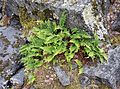 Plant on rocky ground.jpg