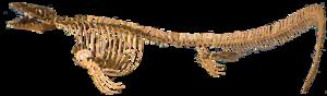 Plioplatecarpinae - Skeleton cast of Platecarpus tympaniticus.