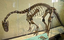 A mounted skeleton of Plateosaurus engelhardti in a glass case, seen from front left. The animal stands on two legs, its back is bent, its neck curves strongly downwards, and the tail drags, creating a drooping look. The palms of the hands face medially.