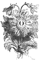 Podróże Gulliwera tom I page0205c.png