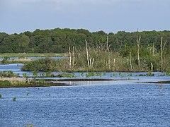 Polder Glies im NSG Sellstedter See und Ochsentriftmoor Wildes Moor.JPG