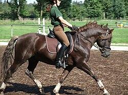 250px-Pony_Stallion.jpg