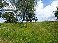 Pope Farm Conservancy - panoramio - Corey Coyle (2).jpg