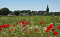 Poppy days (EXPLORE) (5790629720).jpg