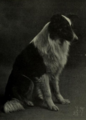 Portrait of dog.xcf