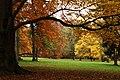 Praha, Holešovice, Stromovka, podzimní louka.jpg