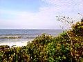 Praia do Grant em Barra Velha , Vegetação de restinga - panoramio.jpg