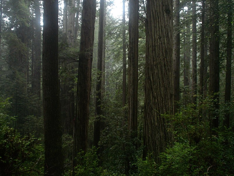 File:Prairie Creek Redwoods - Coastal Redwood Forest.jpg
