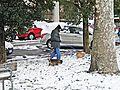 Prato-01,02,2012-Le necessita' dei cani.jpg