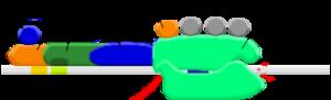 Eukaryotic transcription - Image: Preinitiation complex