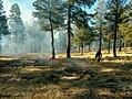 Prescribed burns - Lakeside Ranger District - Dec 2017 01.jpg