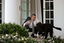Bo und Obama (2012)