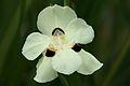 Pretoria Botanical Gardens-041.jpg