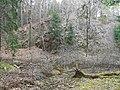 Prießnitz Dresdner Heide 2021-03-28 22.jpg