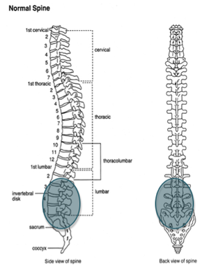 Primary Area Effected by Ankylosing Spondylitis