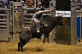 Professional Bull Riding (PBR), Indianapolis 2008 01.jpg