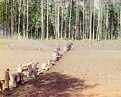 Orthodox monks farming potatoes in Russia, ca. 1910
