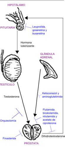 disfunción eréctil después de la criocirugía