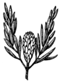 Protea (PSF).png