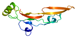 Protein TGFB2 PDB 1tfg.png