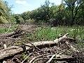 Psilskyi Landscape Reserve (05.05.19) 02.jpg