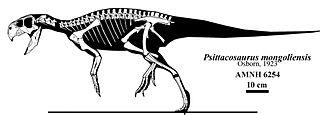 Psittacosaurus - Skeletal restoration of the P. mongoliensis holotype