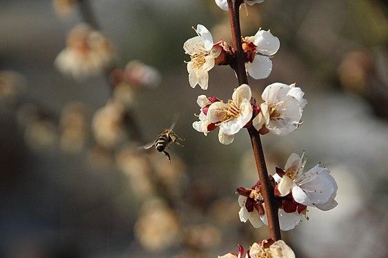 Pszczoła 2020 01.JPG