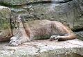 Puma beauval 04.JPG