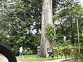 Punta Leona - panoramio (8).jpg