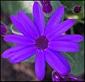 Purple ! (4548457091).jpg