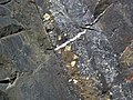 Pyrite crystals in magnetite-quartz banded iron formation (Temagami Iron-Formation, Neoarchean, ~2.736 Ga; Temagami North roadcut, Temagami, Ontario, Canada) 3 (32864625747).jpg