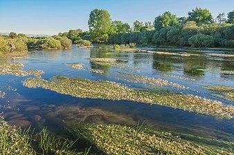Río Tormes en la provincia de Salamanca 2.jpg