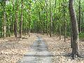 Rajaji National Park, Haridwar 2.jpg