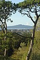 Rangitoto Island from Cornwall Park.JPG