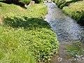 Ranunculus repens (5434505989).jpg